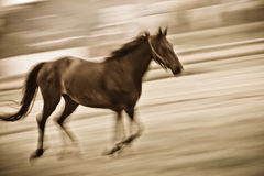 Fast running horse Stock Photo
