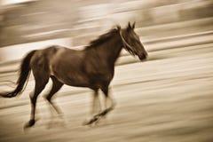 Fast running horse Stock Photo