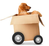 Fast shipment Royalty Free Stock Photography