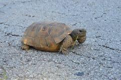 Fast sköldpadda Arkivfoto