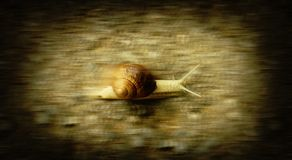 Fast snail Royalty Free Stock Image