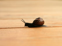 Fast snail Royalty Free Stock Images