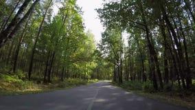 Fast som kör till och med höstskogvägen stock video