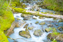 Fast stream flowing among mossy boulders Stock Images