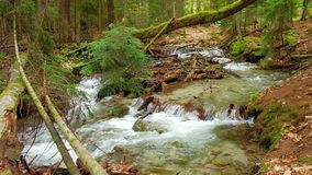 A fast stream, a river with clear water runs in a bright summer forest. Through fallen trees and stones stock video footage