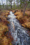 Fast stream in the taiga Stock Photos