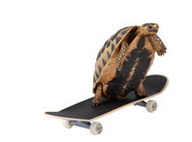 Fast Tortoise. A tortoise moves faster with the help of some roller skates stock image