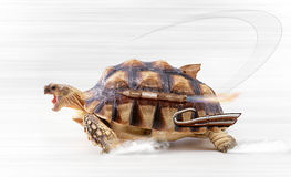 Fast turtle Royalty Free Stock Photo