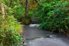 Brook. Small river in wood. Fast water stream in forest Stock Images