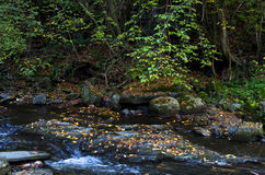 Fast water stream with a lot of fallen yellow leaves at autumn Royalty Free Stock Photos
