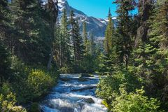 Fast water stream in wild mountain creek in Joffre Lakes Provincial Park green forest landscape. Stock Photo