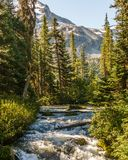 Fast water stream in wild mountain creek in Joffre Lakes Provincial Park green forest landscape. Stock Images