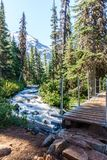 Fast water stream in wild mountain creek in Joffre Lakes Provincial Park green forest landscape. Stock Photography