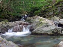 Fast wild water. Fast flowing river meandering and tumbling thou rocks and boulders ,trees and ferns  lining the banks of the river Stock Images