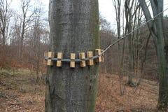 Fastening of steel rope on tree, Kačín Stock Image