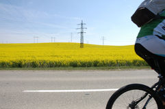 Faster... Biker going very fast around field of yellow flowers Royalty Free Stock Images