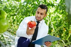 Fastifious researcher. Confused agroengineer in whitecoat looking at red tomato with fastidious expression Royalty Free Stock Photography