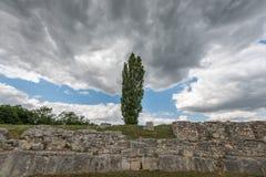 Fastigiate czarna topola przed starą kamienną ścianą i dramatycznym niebem Obraz Stock
