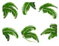 Fastställd gräsplan förgrena sig med sidor av palmträd stock illustrationer