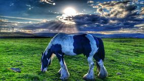 Fastställd häst för sol Arkivbild