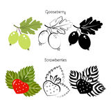 Fastställd jordgubbe för vektor, krusbär Arkivfoto