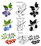 Fastställd kaprifol för vektor, shadberry, rönn Royaltyfria Bilder