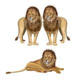 Fastställd vektor för lejon vektor illustrationer