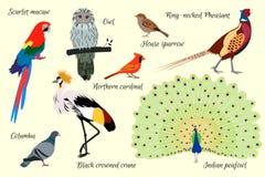 Fastställda fåglar också vektor för coreldrawillustration Arkivfoton