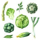 Fastställda gröna grönsaker Arkivbild