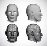 Fastställda kvinnliga huvud. Vektor Royaltyfria Foton
