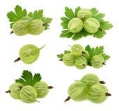 Fastställda mogna gröna krusbär med (isolerade) sidor, Royaltyfri Fotografi