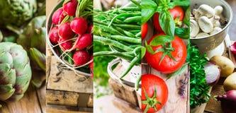 Fastställda nya organiska grönsakörter för collage Mogna tomater, rädisa, haricot vert, kronärtskockor, champinjoner, potatisar,  Royaltyfria Bilder