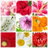 Fastställda ofblooming blommor royaltyfria bilder