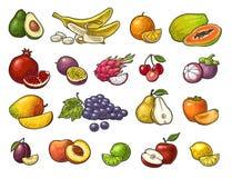 Fastställda tropiska frukter Svart tappninggravyr för vektor som isoleras på vit stock illustrationer