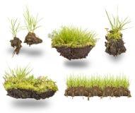 Fastställt grönt gräs Fotografering för Bildbyråer