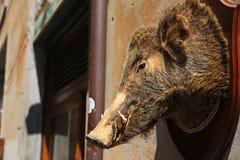 Faszerujący knur wieszał na zewnątrz garmażerii w środkowym Włochy fotografia stock
