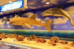 Faszerujący delfin i rekin Obraz Royalty Free