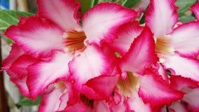 Faszinierend Blume lizenzfreies stockfoto