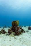 Fat barrel  sponge growing on ocean floor in coral reef Royalty Free Stock Image