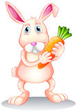 A fat bunny holding a carrot Stock Photo