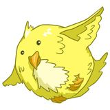 Fat Canary. A large yellow pet canary in flight Royalty Free Stock Images