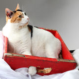 Need more space?. Fat cat cramped into a crate to small for her royalty free stock images