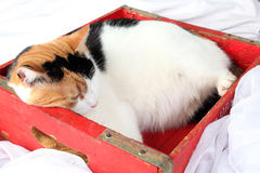 Need more space?. Fat cat cramped into a crate to small for her stock image
