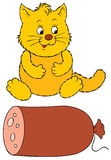 Fat cat and delicious sausage Stock Photos