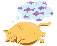 Fat cat. Red cat dreams about fish Stock Images