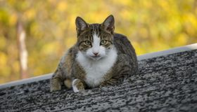 Fat Cat on the rooftop stock images