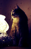 Fat cat sits a top of the lamp and waiting for Christmas Stock Image