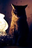 Fat cat sits a top of the lamp and waiting for Christmas Royalty Free Stock Images