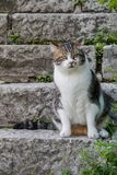 Fat cat sitting on the stone steps. Stock Images