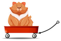 Fat cat sitting on the wagon Stock Photos